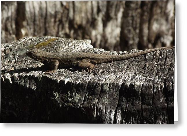 James Rishel Greeting Cards - Lizard in thought Greeting Card by James Rishel