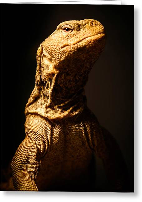 Lizard Head Greeting Cards - Lizard King Greeting Card by Marco Oliveira