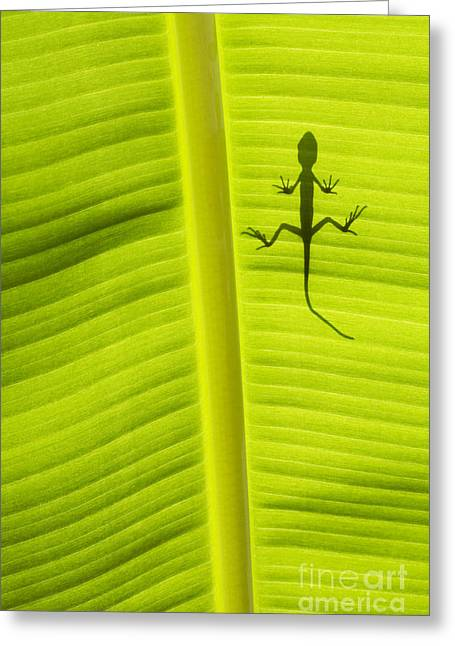 Tropical Leaves Greeting Cards - Lizard Leaf Greeting Card by Tim Gainey