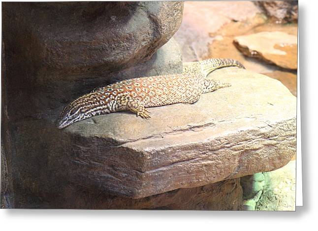 Aquatic Greeting Cards - Lizard - National Aquarium in Baltimore MD - 12123 Greeting Card by DC Photographer