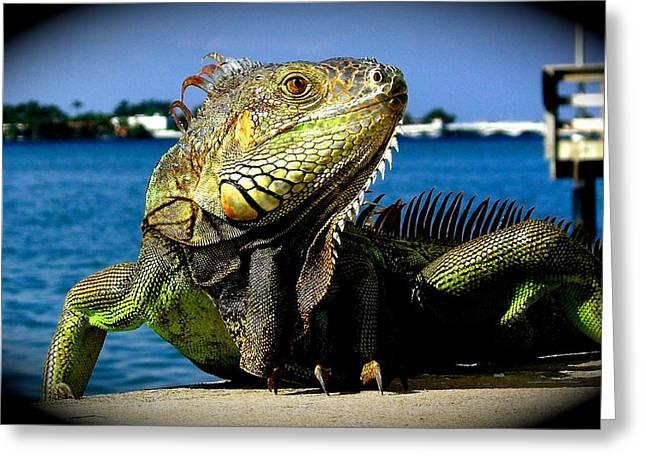 Sunbathing Greeting Cards - Lizard sunbathing in Miami Greeting Card by Monique Wegmueller