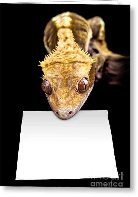 Changing Colour Greeting Cards - Lizard with blank sign Greeting Card by Simon Bratt Photography LRPS