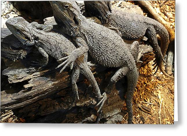 Zoology Greeting Cards - Lizards Greeting Card by Les Cunliffe