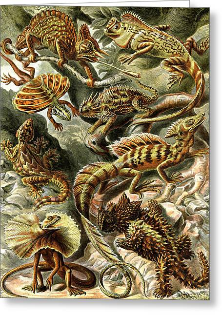 Lounge Digital Art Greeting Cards - Lizards Lizards and More Lizards Greeting Card by Unknown
