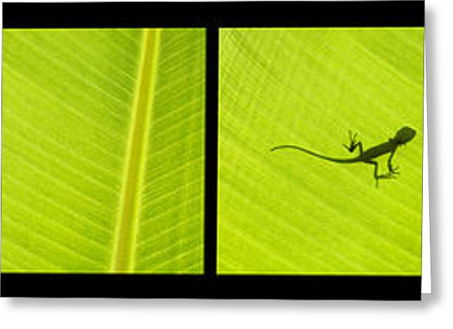 Sequence Greeting Cards - Lizards Greeting Card by Tim Gainey