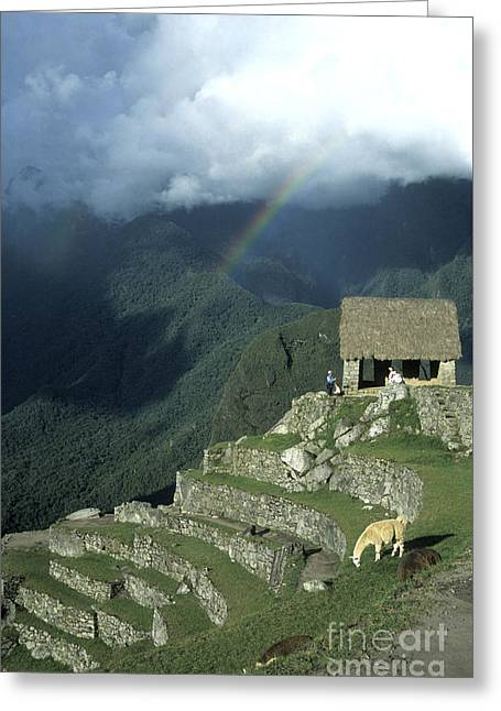 Archaeological Greeting Cards - Llama and rainbow at Machu Picchu Greeting Card by James Brunker