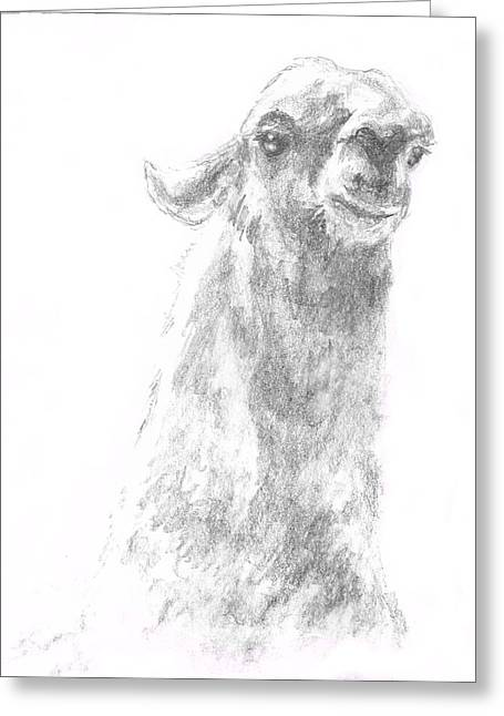 Llama Drawings Greeting Cards - Llama Close up Greeting Card by Andrew Gillette