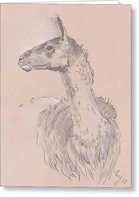 Llama Drawings Greeting Cards - Llama Drawing Greeting Card by Mike Jory