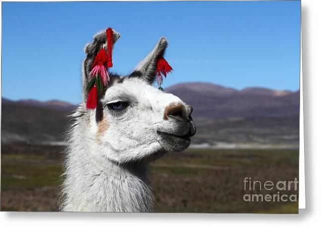 Llama Photographs Greeting Cards - Llama Earring Fashion Greeting Card by James Brunker