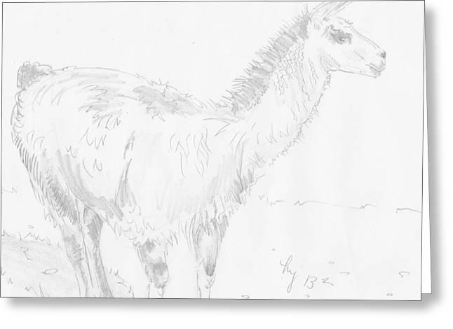Llama Drawings Greeting Cards - Llama Greeting Card by Mike Jory