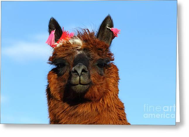 Llama Photographs Greeting Cards - Llama portrait Greeting Card by James Brunker