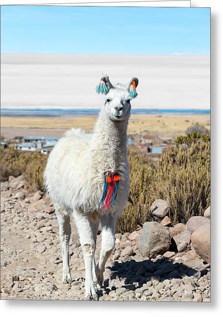 Llama Photographs Greeting Cards - Llama with Uyuni Salt Flats Greeting Card by Jess Kraft