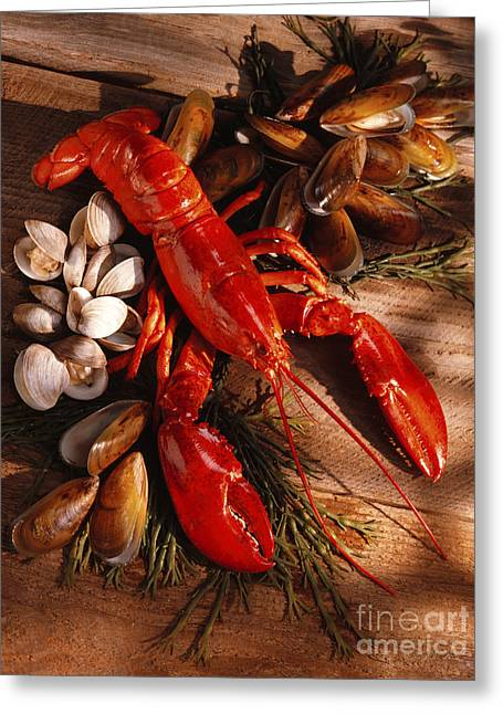 Owner Greeting Cards - Lobster Clams and Mussels on Seaweed Greeting Card by Iris Richardson