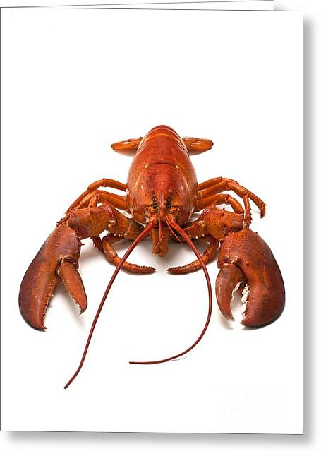Aquatic Greeting Cards - Lobster, Cooked Greeting Card by David Nunuk