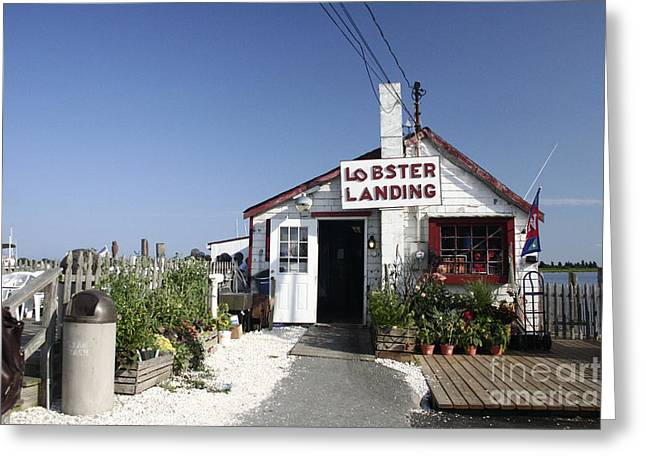 Lobster Shack Greeting Cards - Lobster Landing Greeting Card by B Rossitto