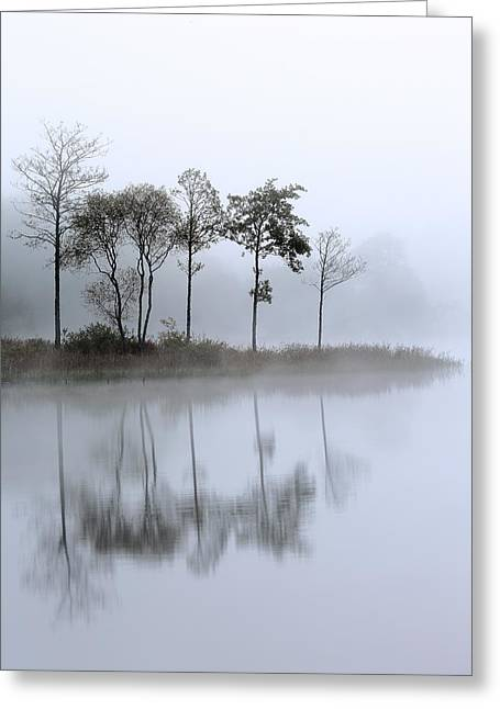 Scotland Greeting Cards - Loch Ard trees in the mist Greeting Card by Grant Glendinning