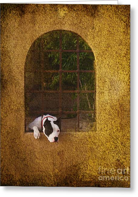 Puppies Greeting Cards - Lock Down Greeting Card by Kandy Hurley