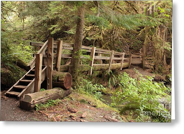 Wooden Structures Greeting Cards - Log Bridge in the Rainforest Greeting Card by Carol Groenen
