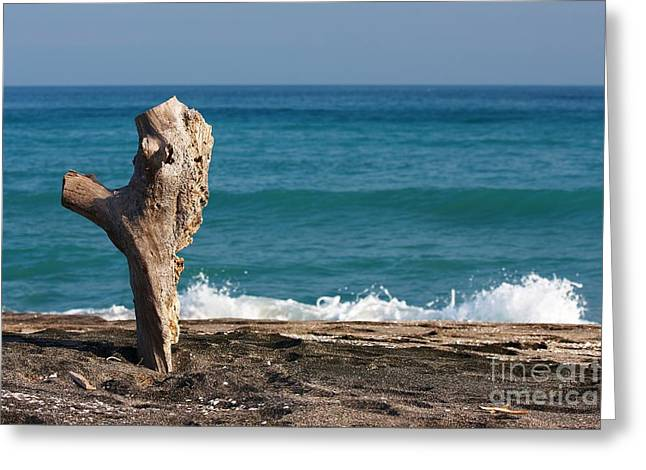 Log Pyrography Greeting Cards - Log on the beach Greeting Card by Victor Georgiev