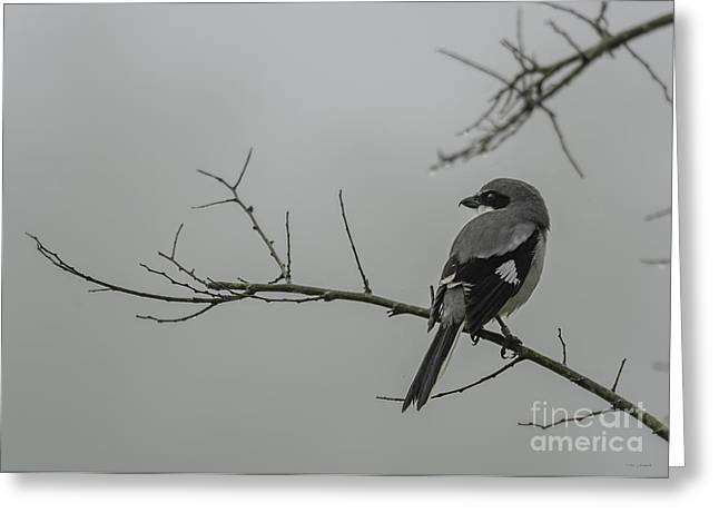 Loggerhead Shrike in Fog Greeting Card by Cindy Bryant