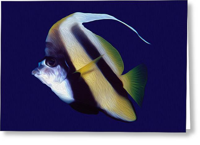 Undersea Photography Greeting Cards - Lone Banner fish Greeting Card by Roy Pedersen