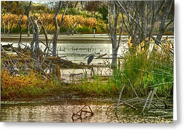 Lone Blue Heron In Fall Greeting Card by Kimberleigh Ladd