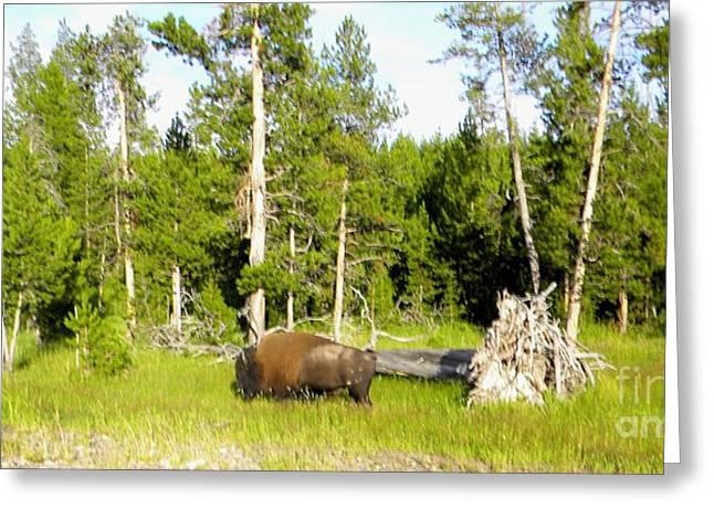 Naturalistic Mixed Media Greeting Cards - Lone Buffalo Greeting Card by Kim Petitt