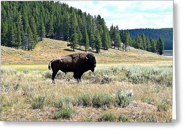 Buffalo Pyrography Greeting Cards - Lone Buffalo Greeting Card by Trisha Shrum Shrader