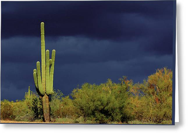 Impending Greeting Cards - Lone Cactus Sentry Greeting Card by Douglas J Fisher