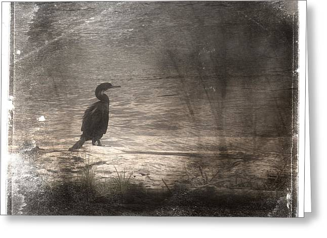 Grungy Greeting Cards - Lone Cormorant Greeting Card by Carol Leigh