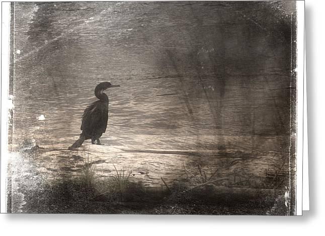 Lone Cormorant Greeting Card by Carol Leigh