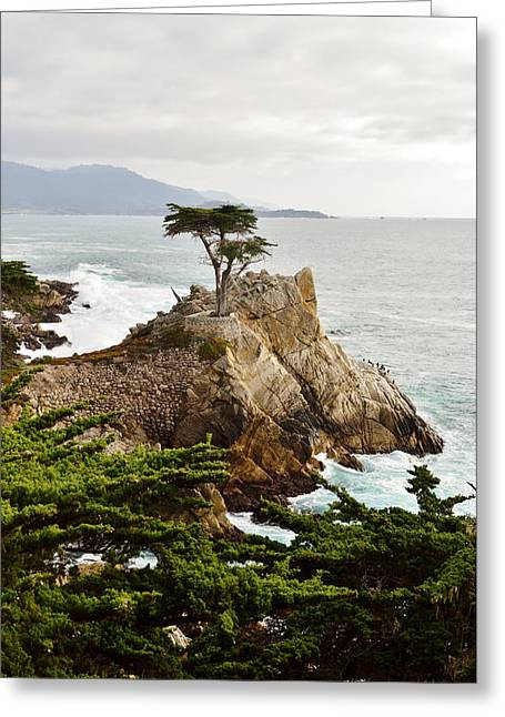 Scenes Of Pebble Beach Greeting Cards - Lone Cypress 17 Mile Drive Monetery Greeting Card by Barbara Snyder