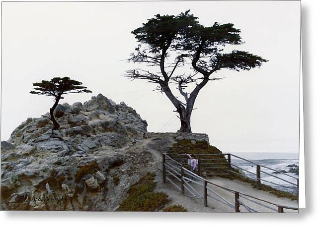 Ocean Scenes Greeting Cards - Lone Cypress 1970 Greeting Card by Floyd Snyder