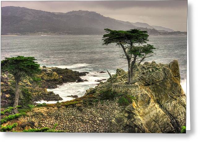 The Lone Cypress Greeting Cards - Lone Cypress Across Monterey Peninsula-1 Central California Coast Spring Mid-Afternoon Greeting Card by Michael Mazaika