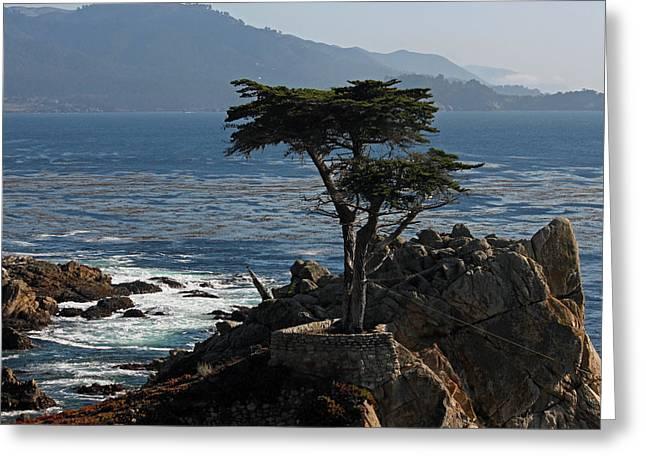 Big Sur California Greeting Cards - Lone Cypress - Big Sur II Greeting Card by Suzanne Gaff