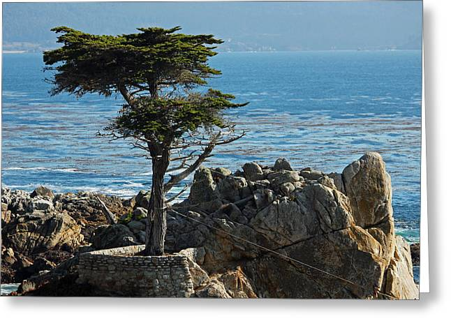 Big Sur California Greeting Cards - Lone Cypress - Big Sur Greeting Card by Suzanne Gaff