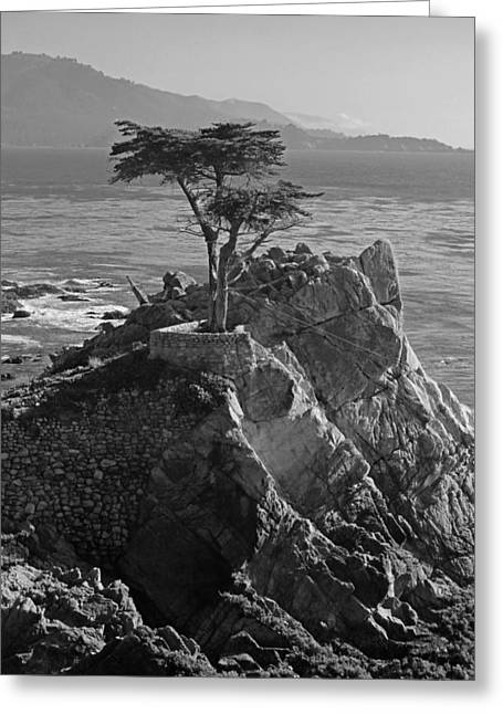 Big Sur California Greeting Cards - Lone Cypress - Big Sur VI in Black and White Greeting Card by Suzanne Gaff