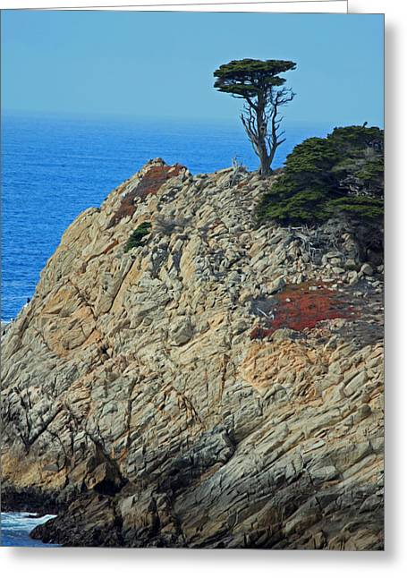 Big Sur California Greeting Cards - Lone Cypress - Big Sur X Greeting Card by Suzanne Gaff