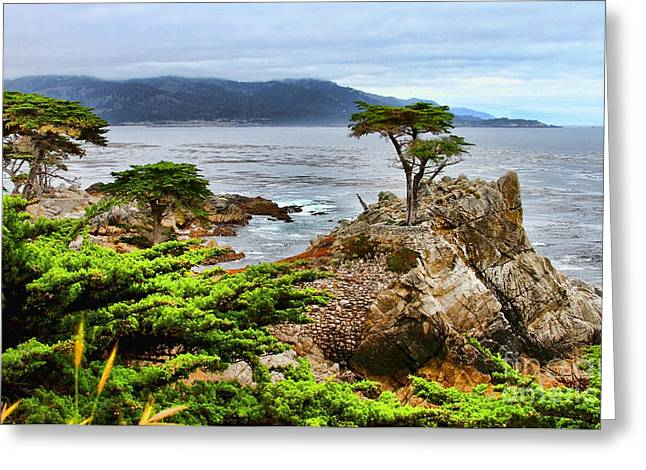 Point Lobos Greeting Cards - Lone Cypress By Diana Sainz Greeting Card by Diana Sainz