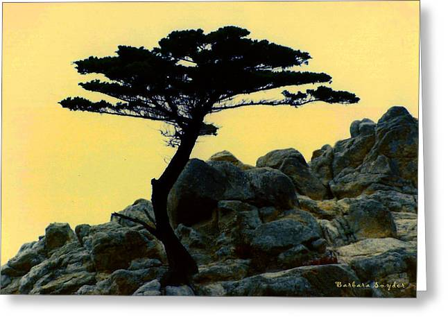 Scenes Of Pebble Beach Greeting Cards - Lone Cypress Companion Greeting Card by Barbara Snyder
