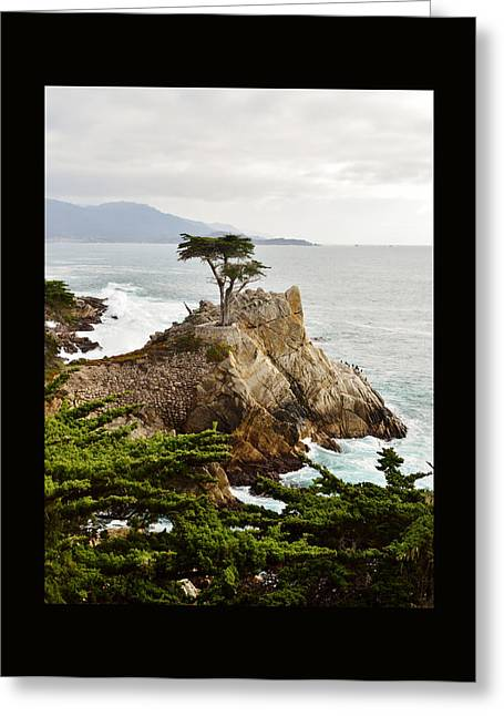 Scenes Of Pebble Beach Greeting Cards - Lone Cypress Duvet Greeting Card by Barbara Snyder