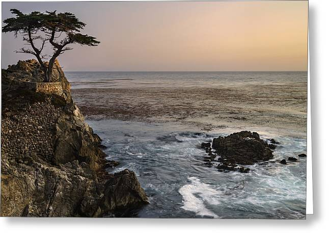 California Beach Greeting Cards - Lone Cypress Greeting Card by Francesco Emanuele Carucci