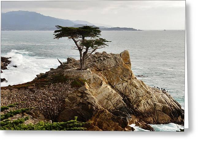Monterey Ocean Scene Greeting Cards - Lone Cypress Monterey California Greeting Card by Barbara Snyder