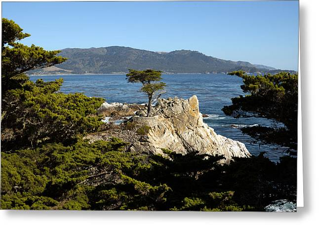 Recently Sold -  - Scenic Drive Greeting Cards - Lone Cypress on 17-mile Drive  Greeting Card by Carol M Highsmith