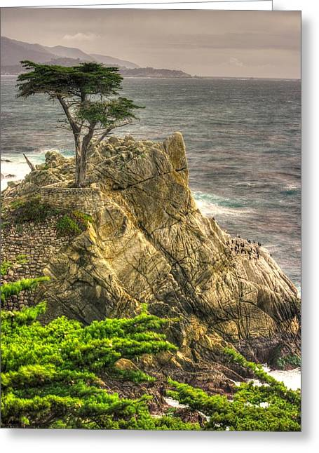 The Lone Cypress Greeting Cards - Lone Cypress on the Monterey Peninsula - No. 1 Looking Across Carmel Bay Spring Mid-Afternoon Greeting Card by Michael Mazaika