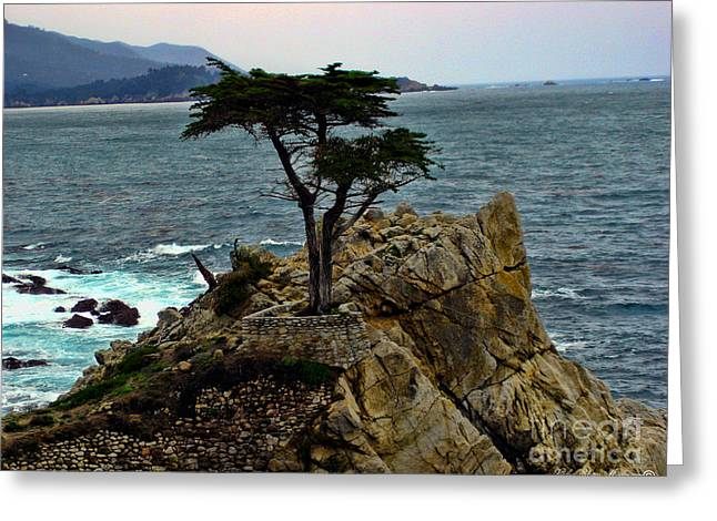 The Lone Cypress Greeting Cards - Lone Cypress Tree Greeting Card by Lidia Anderson