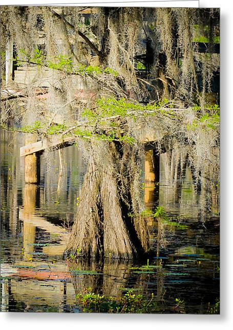 Caddo Lake Greeting Cards - Lone cypress wading Greeting Card by Geoff Mckay
