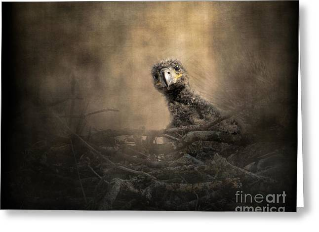 Baby Bird Greeting Cards - Lone Eaglet In The Nest Greeting Card by Jai Johnson