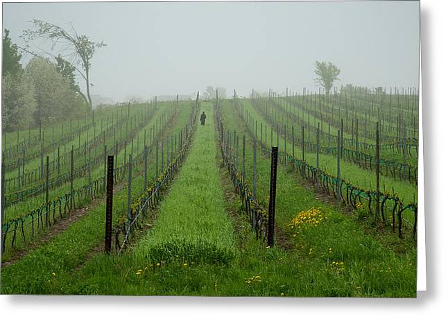 Lone Figure in Vineyard in the Rain on the Mission Peninsula Michigan Greeting Card by Mary Lee Dereske