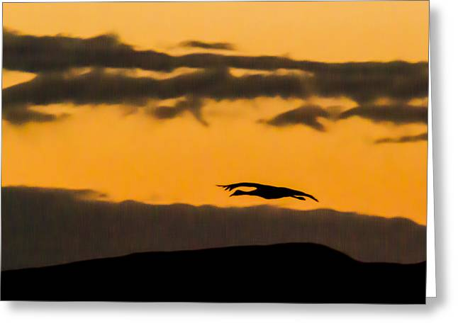 Lone Flying Sandhill Crane At Sunset Greeting Card by Jean Noren